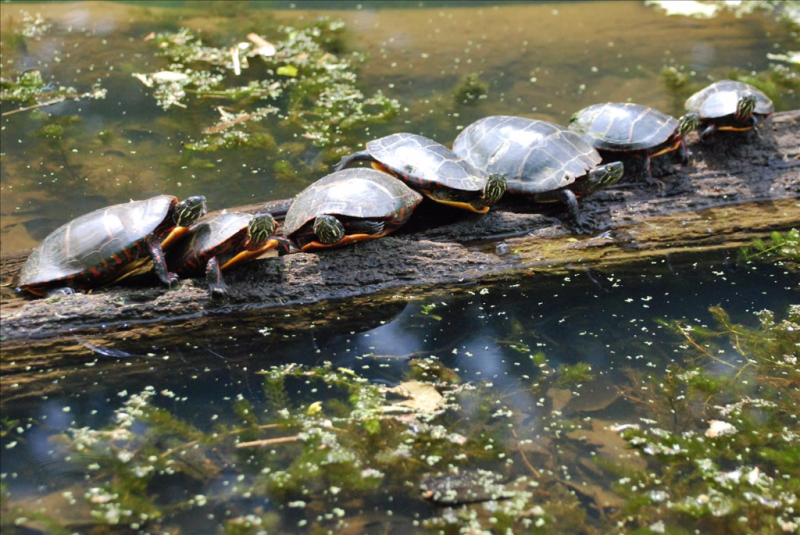 9_Turtles