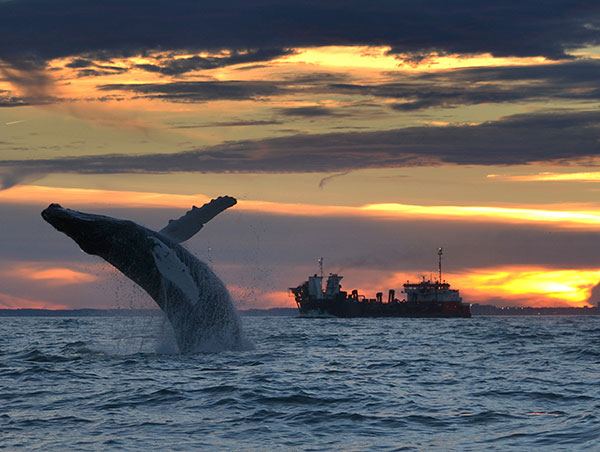 2015-photo-contest-humpback-whale-brian-lockwood-600x452
